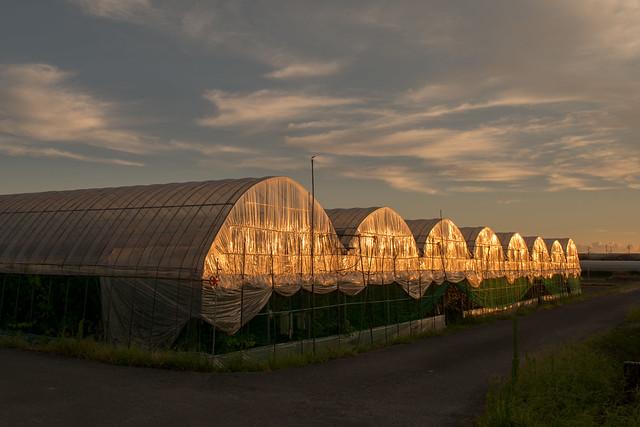 Orange greenhouse.