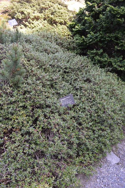Rhododendron Species Botanic Garden, Federal Way, WA