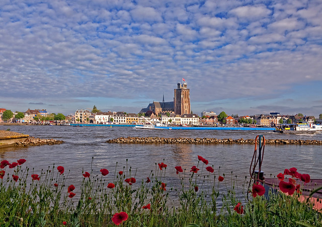 poppies on the river