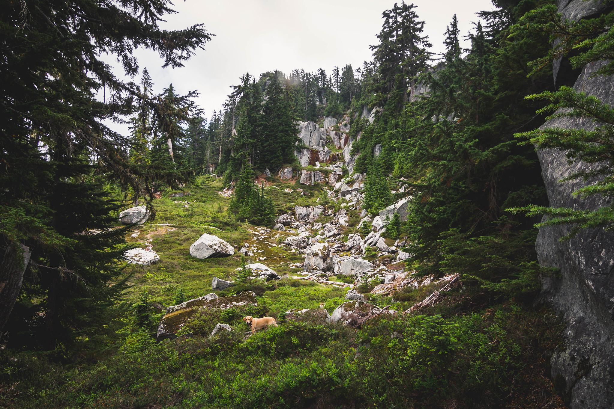 Mount Price north ridge