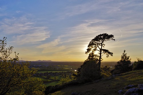 tree trees woods hill haughmondhill shropshire shrewsbury light sky sun shine