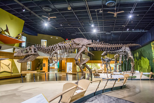 dinosaur exhibit - Cleveland Museum of Natural History   by Tim Evanson