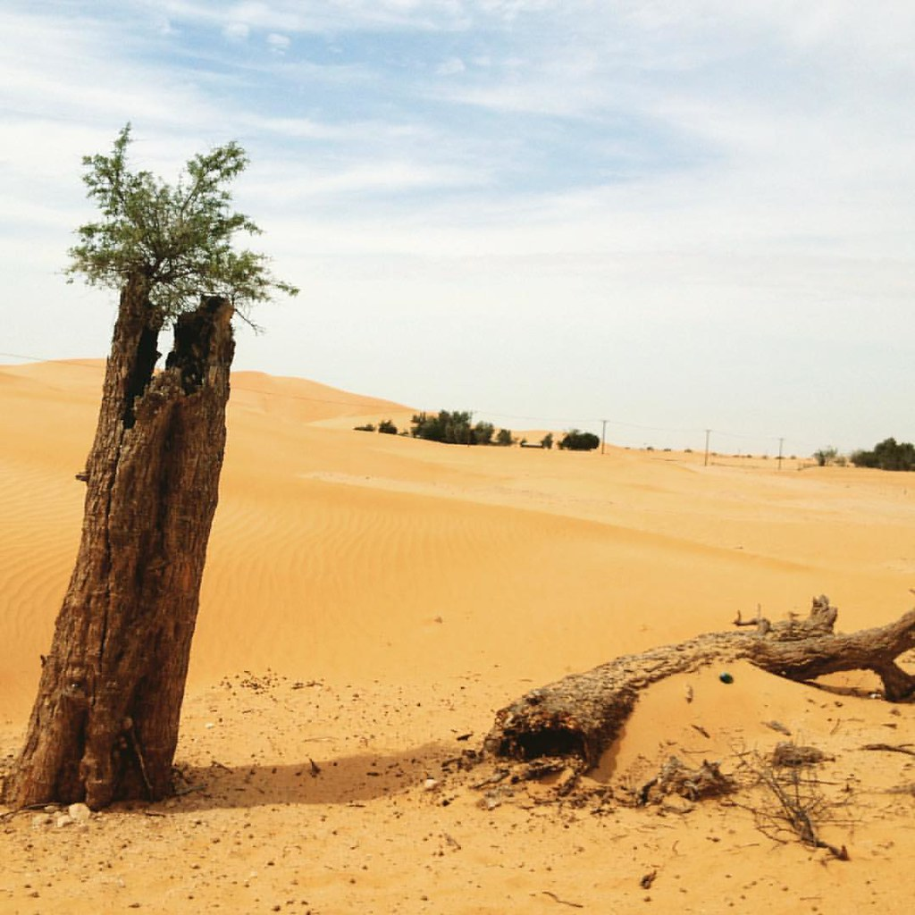 Don't give up لا تستسلم #UAE #dubai #دبي #الامارات #Inspir… | Flickr