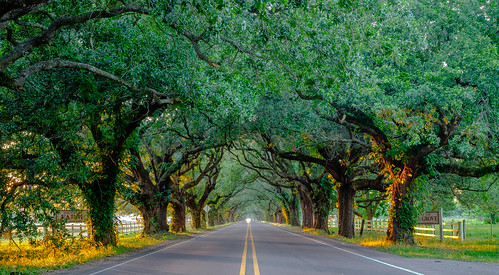 roadway xt2 fujifilm 35mm fujixt2 light southlouisiana fujinon mirrorless fujifilmxt2 stbernardparish color colors vivid sunlight louisiana fujinon35mm daylight evening view docvillefarm theparish xf35mmf14r golden goldenhour perspective fuji treetunnel dusk colorful scenic lights highway lines velvia green yellow orange leaves branches oak violetlouisiana scape landscape peaceful fujixf35mmf14r vanishingpoint symmetry