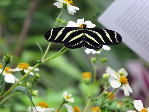 Striped butterfly in the Hortus Gardens in Amsterdam, Holland