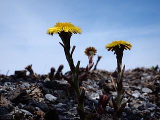 Enfin des fleurs....   by Lise1011