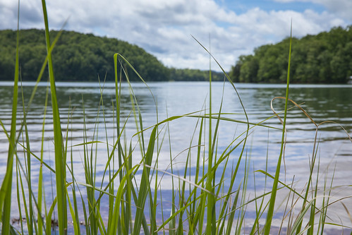 shore shoreline grass grow green blue water lake wet pond pool reservoir tva tennesseevalleyauthority chatuge waves sky clouds background nature outdoors peaceful vacation swim ripple summer dslr 5d markiv
