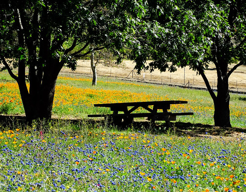 oakglenca losriosrancho california usa landscapes picnictable wildflowers oaktree spring springflowers shadetrees