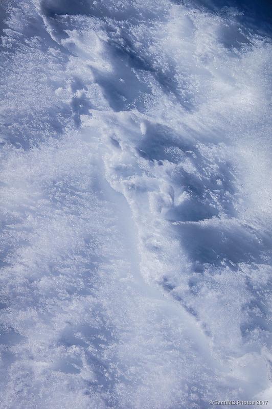 Nieve atormentada