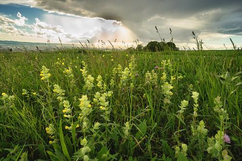 baselriehenschweiz landscape feld feldblumen feldwiese gewitter sony alpha 99 a99 minolta 1735