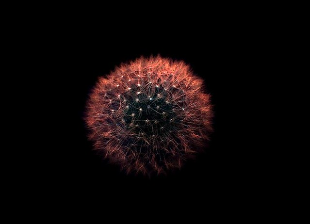 Dandelion Galaxy