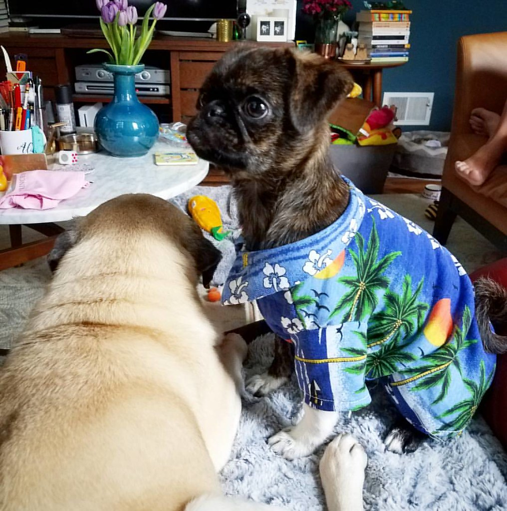 Monkey isn't so sure about this new Hawaiian shirt my frie… | Flickr