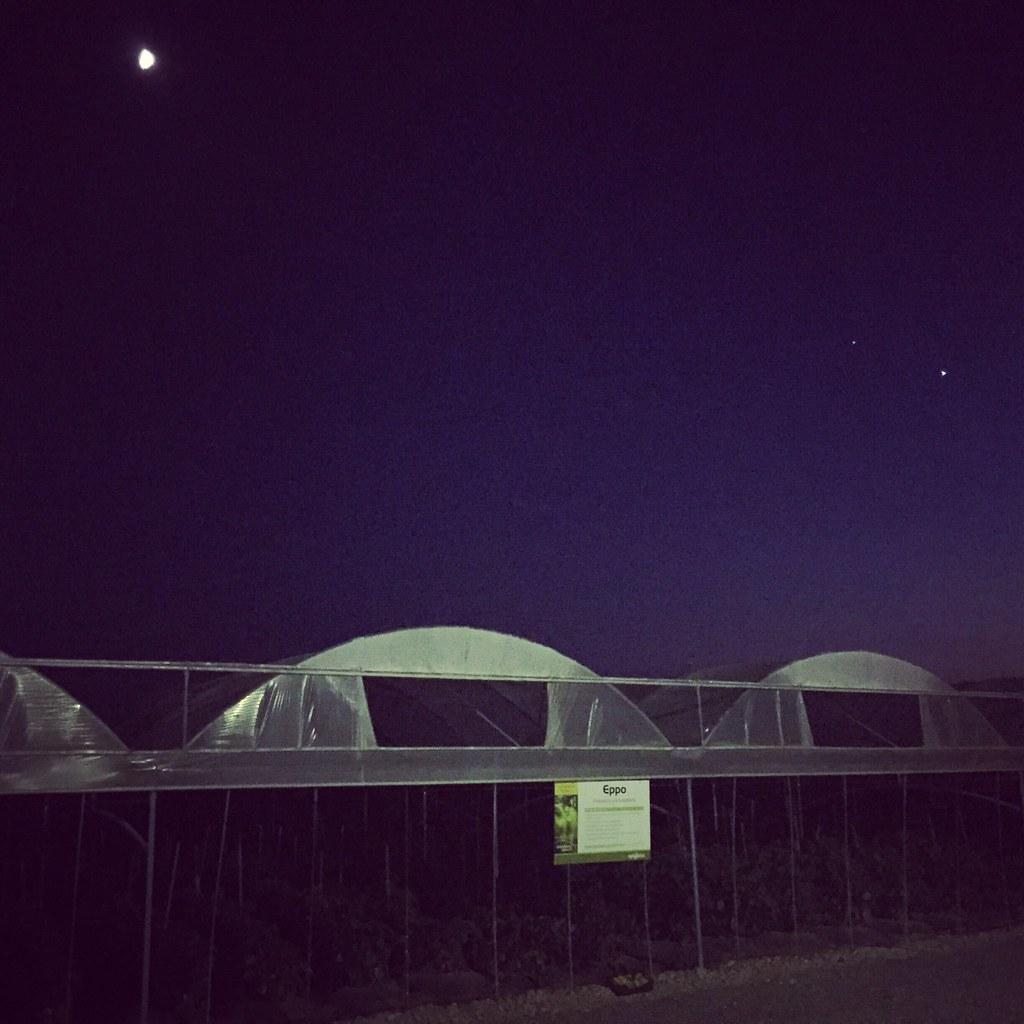 Orticoltura e Valore - prove in campo Peperone 2015 - 2121