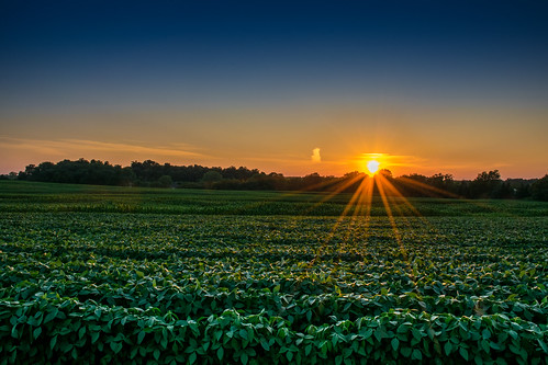 sunset summer sun ny newyork hot green colors field evening us nikon warm unitedstates dusk farm upstate rochester pittsford humid d5300