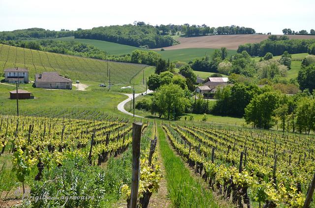 Brazalem, petit hameau dans les vignes du Château de Gueyze