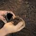 The International Network of Black Soils