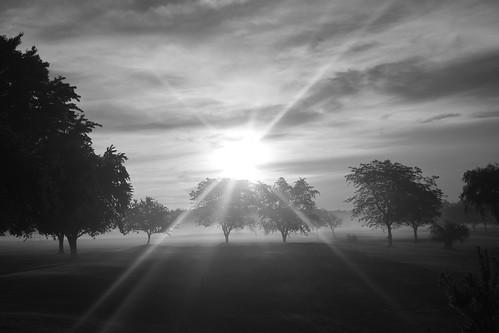 bw blackandwhite monochrome trees sunrise nature summer sky landscape lockportny niagaracountyny nikond5200