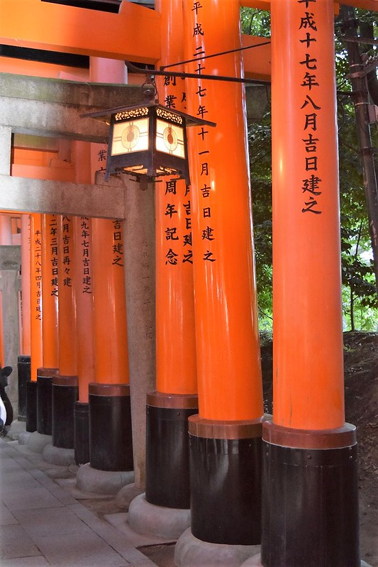Countless Torii