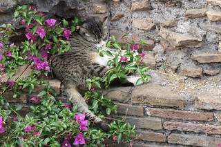 FMS Photo A Day May 2 - No filter #fmspad #fmsphotoaday #fms_nofilter #rome #italy #ladinitaly2017 #catchingup #betterlatethannever #cat #cats #catsofinstagram #catsanctuary #torreargentina #torreargentinacatsanctuary | by Laurel Storey, CZT