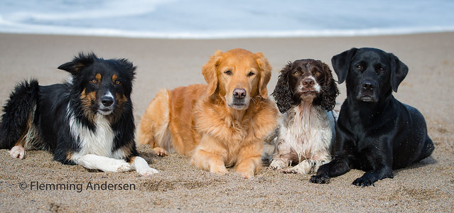 just dogs in the sand