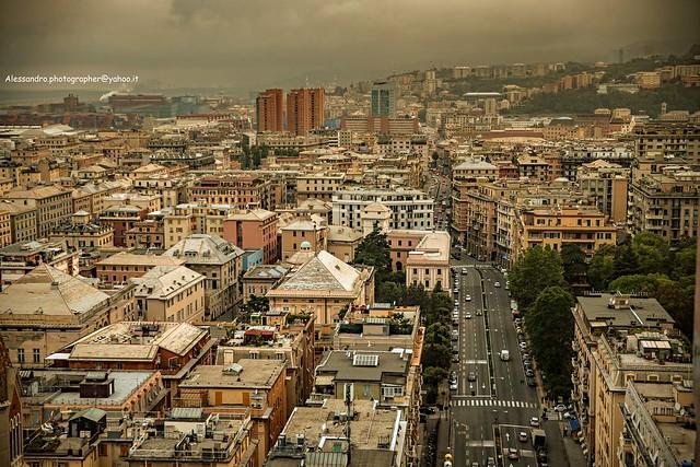 Flying as a seagull - Via Cantore e grattacieli della Fiumara (Genova - Italy)