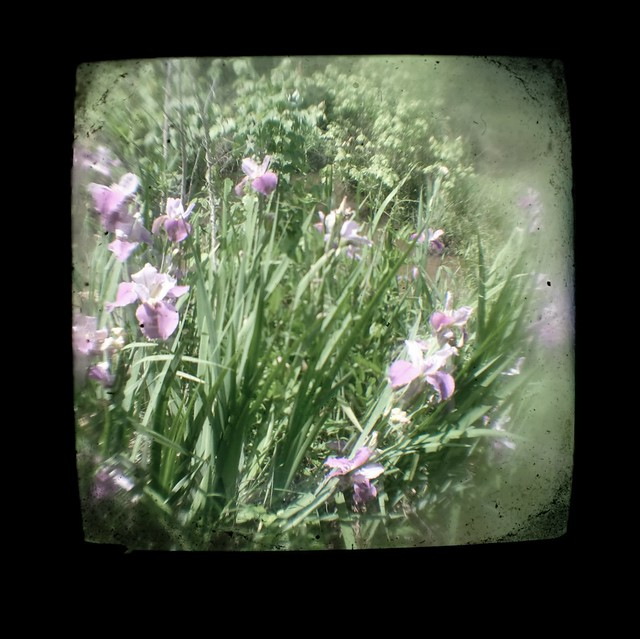 Flowers Through The Viewfinder