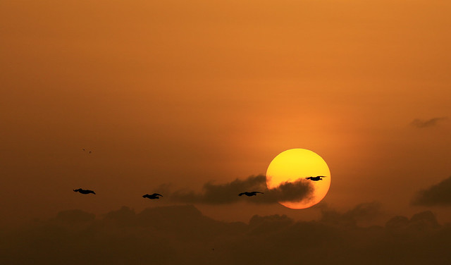 Banner (sunset in Senegal)