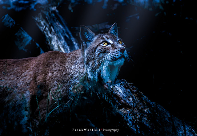 Ready to hunt / Bereit zur Jagd