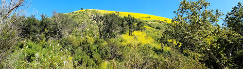 whitingranchwildernesspark foothillranch california photo digital spring ridge foothills meadow panorama oaks mustard