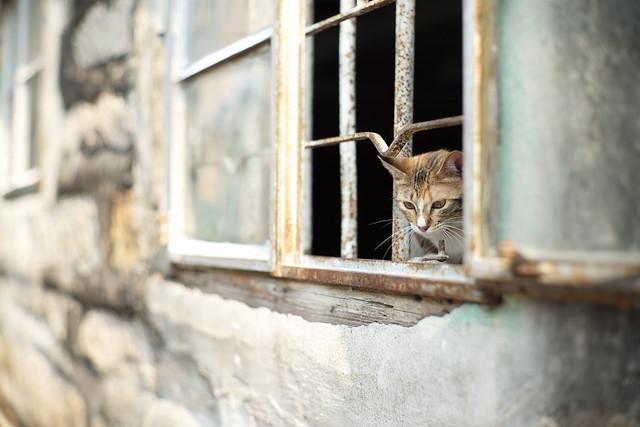 Squatter Cat #001