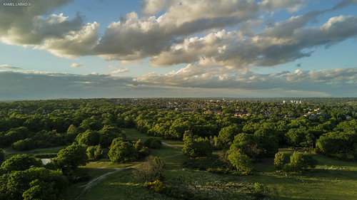 Epping Forest | by Kamel3D.UK