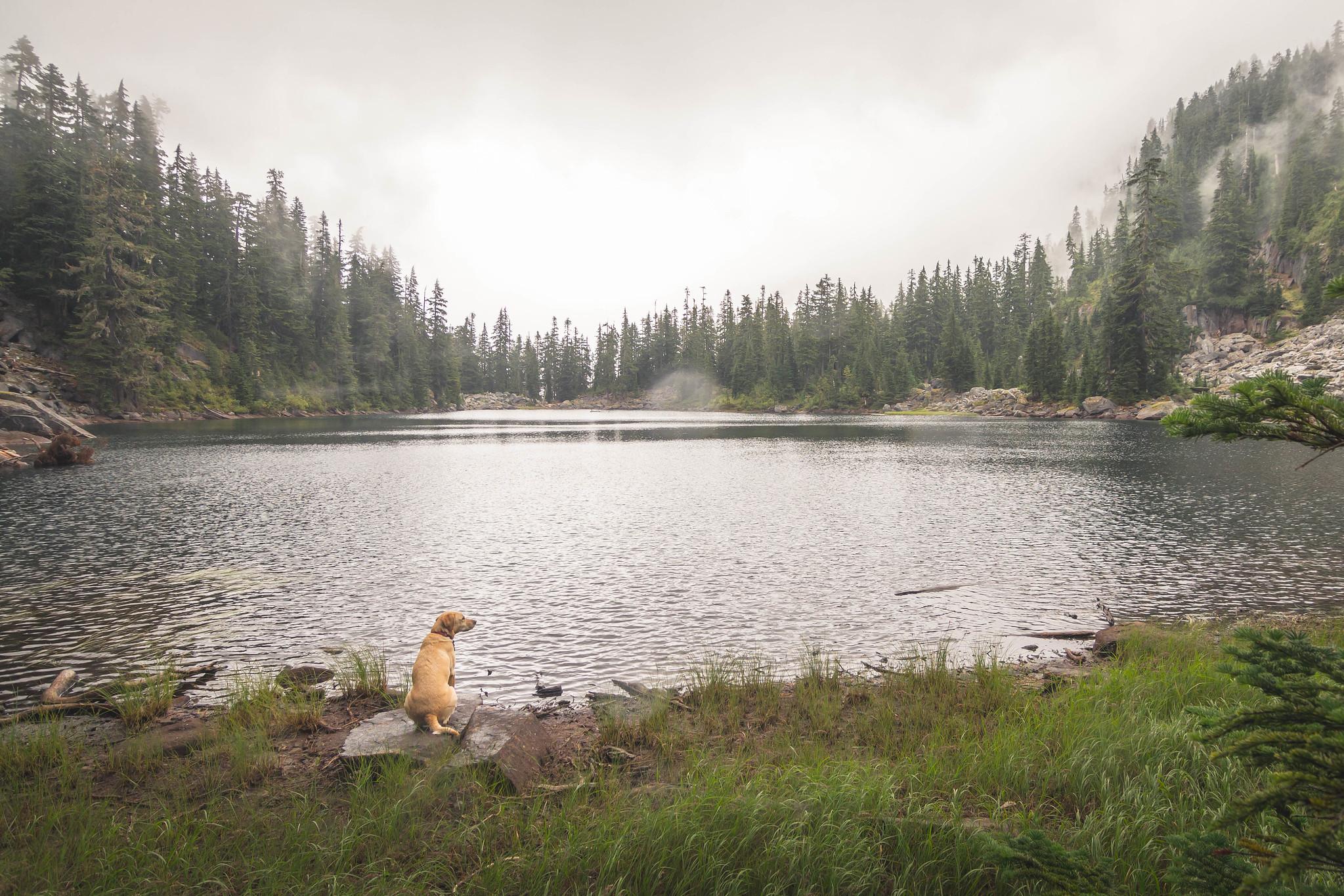 Little Hester Lake westshore