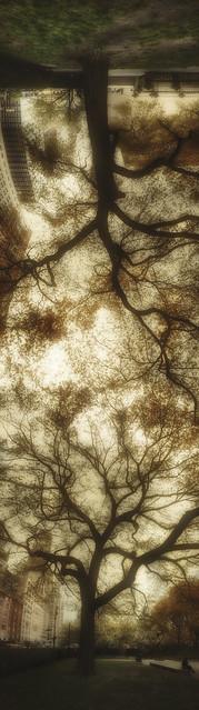 Chicago Art Institute Trees