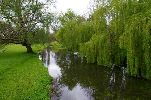 The willows by the river.