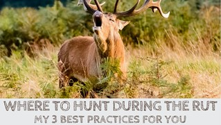 Where to Hunt During the Rut? My 3 Best Practices for You | by Victor Mays