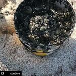 #Repost @conbive (@get_repost)  Hoy los roqueños se levantaron bien tempranito y se fueron a Nordisquí para recoger el petróleo de las playas del cayo.  Con el valioso apoyo de las operadoras turísticas, posadas y escuelas de KiteSurf de Los Roques, se de