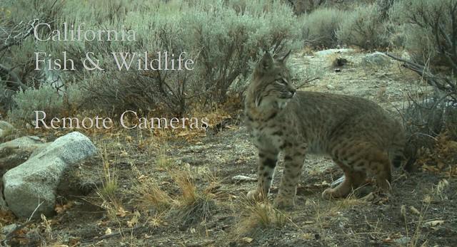 Fish&WildlifeRemoteCameras