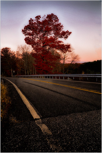 autumn nature scenics newyork 2016 fall everypixel harrimanstatepark travel curve transportation sky asphalt sunrise plants street harrimanpark city ruralscene weather traffic dividingline trees tree highway forest hiking landscape unitedstates outdoors dawn road southfields us