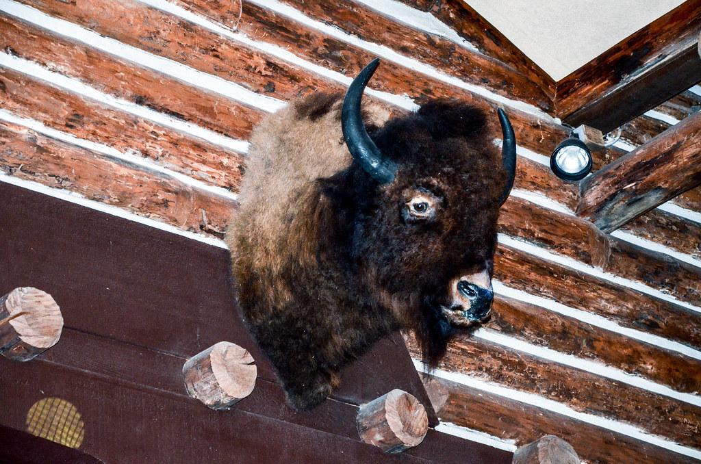 Buffalo Hoop Dee Doo