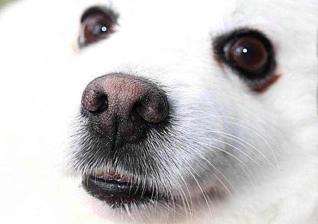 Nosey nose