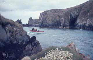 Puffin' to Cape Clear North Harbour. Armeria and Cochlearia, April 1963
