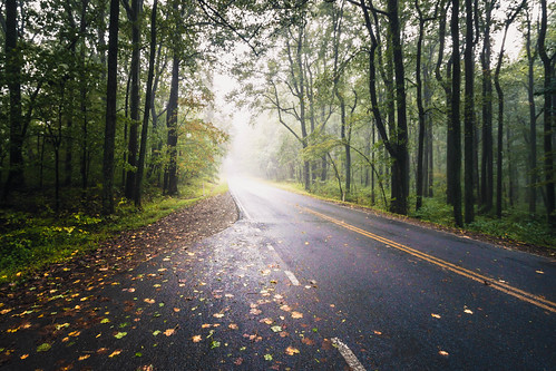 autumn usa landscape season nature nationalpark mountains road overcast roadside fall mist wet appalachian trees shenandoah national silhouette virginia travel forest scenic skylinedrive leaves park green fog cloudy foggy frontroyal unitedstates us
