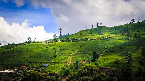 srilanka nuwaraeliya colombotonuwaraeliyatrainride landscape hillcountry teagarden hills sky clouds canon canoneos7d canonefs18135mmf3556is