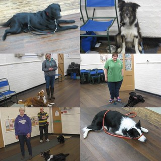 Obedience dogs and handlers