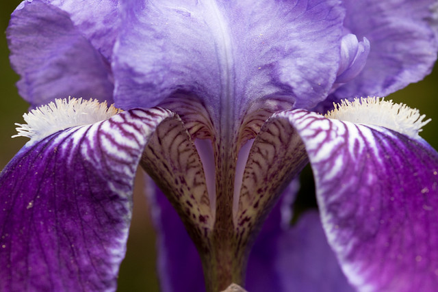 Iris. (Which is a part of an eye) Eyes. Macro Monday.