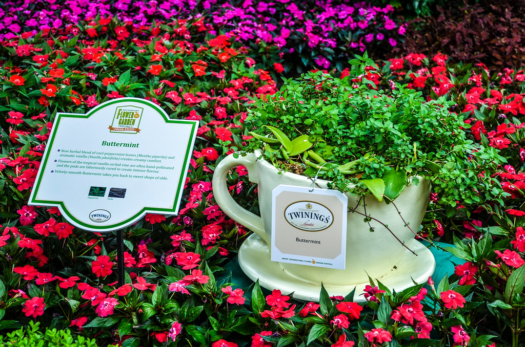 Tea Tour Buttermin Epcot FG