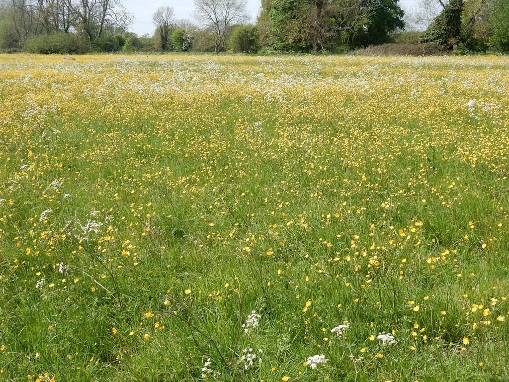 Water meadow near Dedham Lock Manningtree Circular
