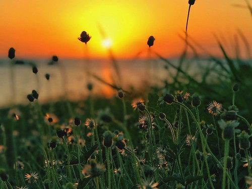 grass golden goldenhour sea beach nature tranquil sunset