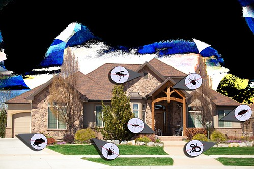 Pest Control Around The House | by insightpest