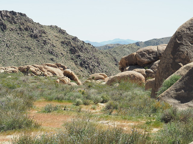Q3267345 Joshua Tree National Park Stirrup Tank